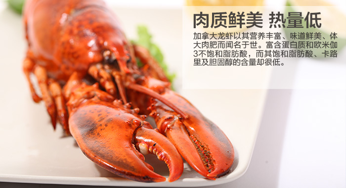 海龙虾吃法图解